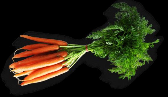 carrotts 2
